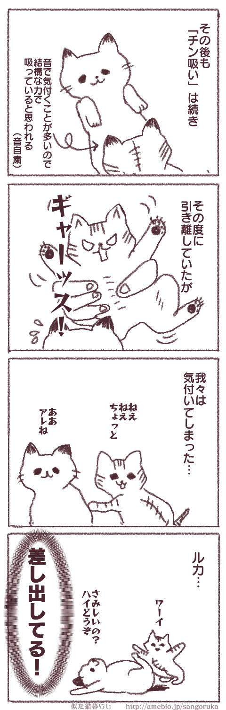 f:id:sangoruka_cats:20171107144036p:plain