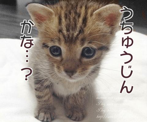 f:id:sangoruka_cats:20171107144043p:plain