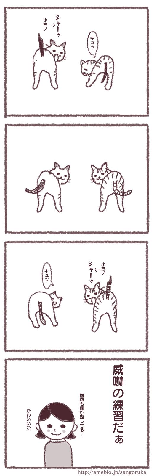 f:id:sangoruka_cats:20171107144044p:plain