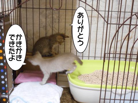 f:id:sangoruka_cats:20171107144049p:plain