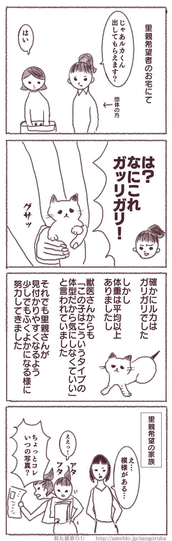 f:id:sangoruka_cats:20171107144052p:plain