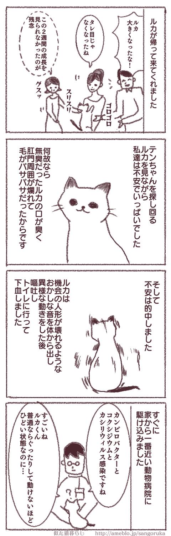f:id:sangoruka_cats:20171107144057p:plain