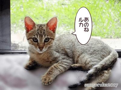 f:id:sangoruka_cats:20171107144059p:plain