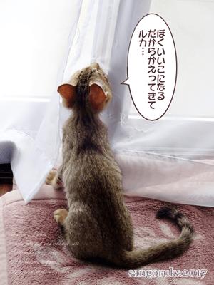 f:id:sangoruka_cats:20171107144101p:plain