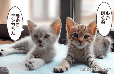 f:id:sangoruka_cats:20171107144103p:plain