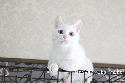 f:id:sangoruka_cats:20171107154225j:plain