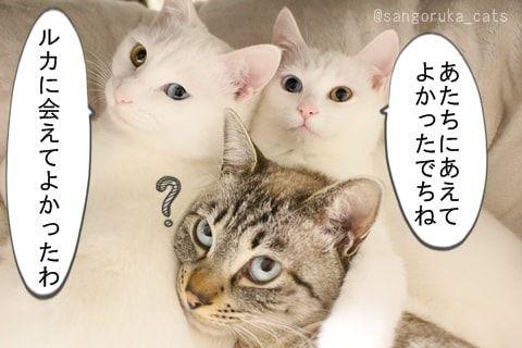 f:id:sangoruka_cats:20171107154240j:plain