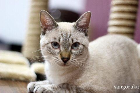 f:id:sangoruka_cats:20171107154244j:plain