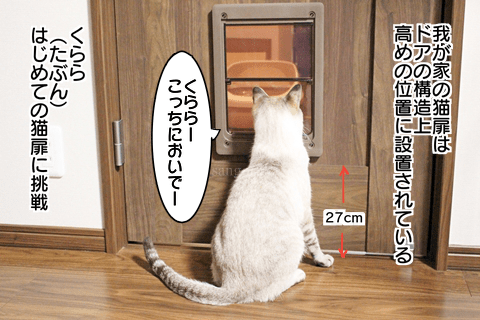f:id:sangoruka_cats:20171108041004p:plain