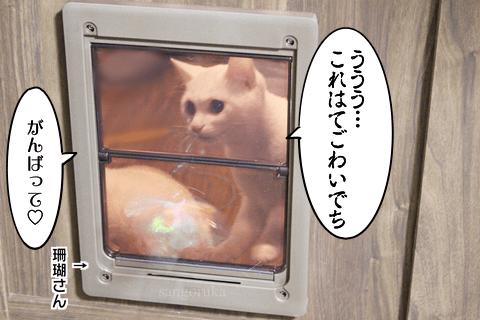 f:id:sangoruka_cats:20171108041005p:plain