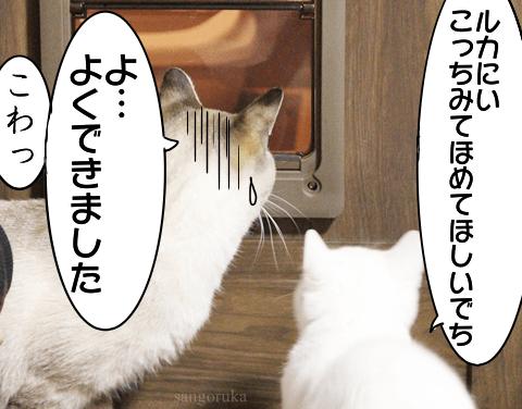 f:id:sangoruka_cats:20171108041006p:plain