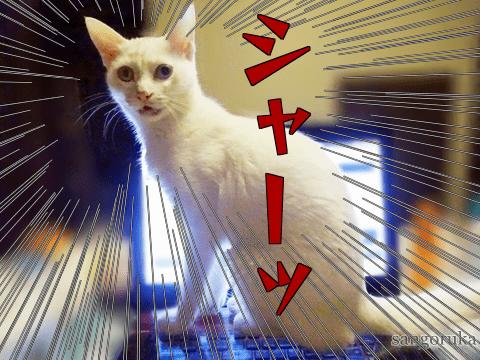 f:id:sangoruka_cats:20171108155807p:plain
