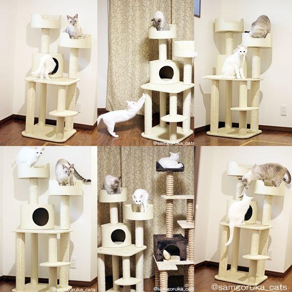f:id:sangoruka_cats:20171109024104j:plain