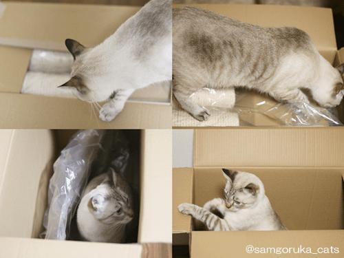 f:id:sangoruka_cats:20171109024109p:plain