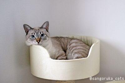 f:id:sangoruka_cats:20171109024115j:plain