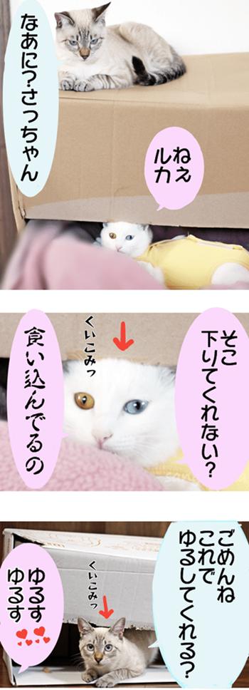f:id:sangoruka_cats:20171109032009p:plain