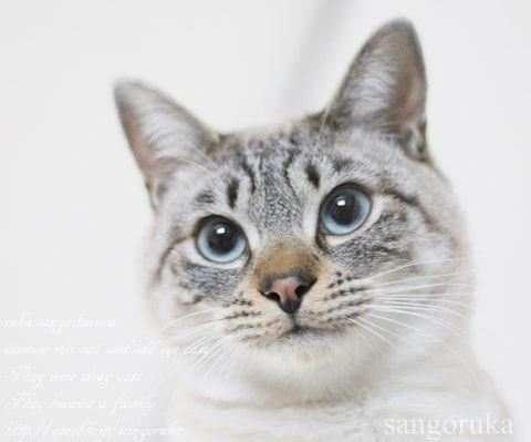 f:id:sangoruka_cats:20171109132014j:plain