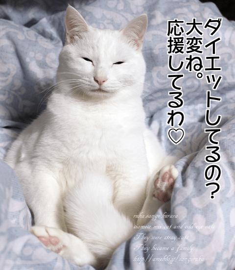 f:id:sangoruka_cats:20171109132018p:plain
