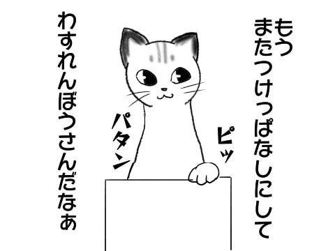 f:id:sangoruka_cats:20171110151703j:plain
