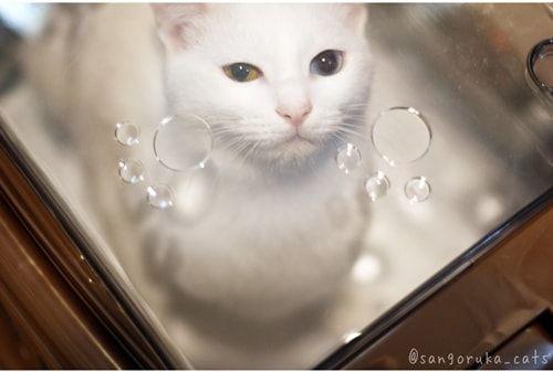f:id:sangoruka_cats:20171111063234j:plain