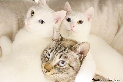 f:id:sangoruka_cats:20171112022008j:plain