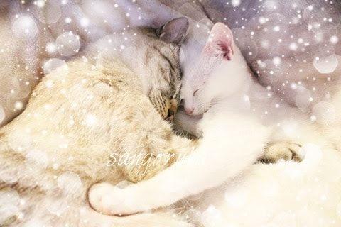 f:id:sangoruka_cats:20171112024420j:plain