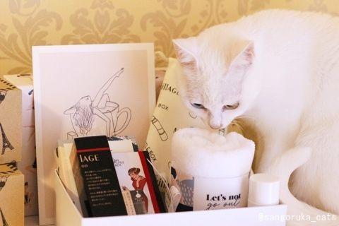 f:id:sangoruka_cats:20171114164602j:plain