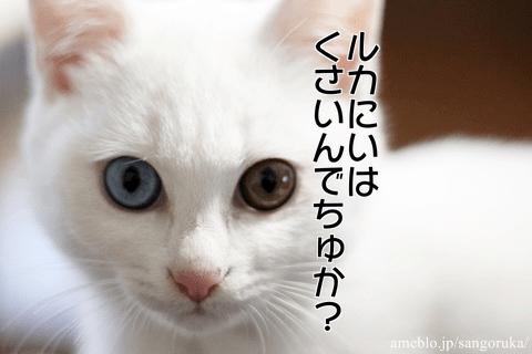 f:id:sangoruka_cats:20171118150226p:plain