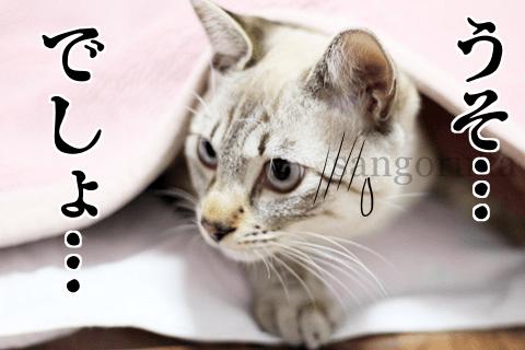 f:id:sangoruka_cats:20171118150228p:plain