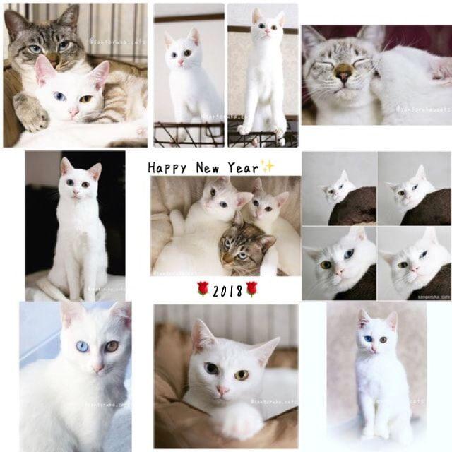 f:id:sangoruka_cats:20180112173226j:plain