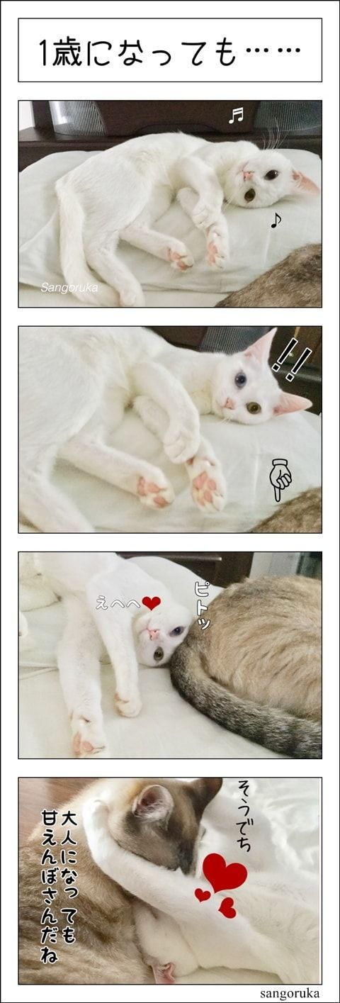 f:id:sangoruka_cats:20180126232004j:plain