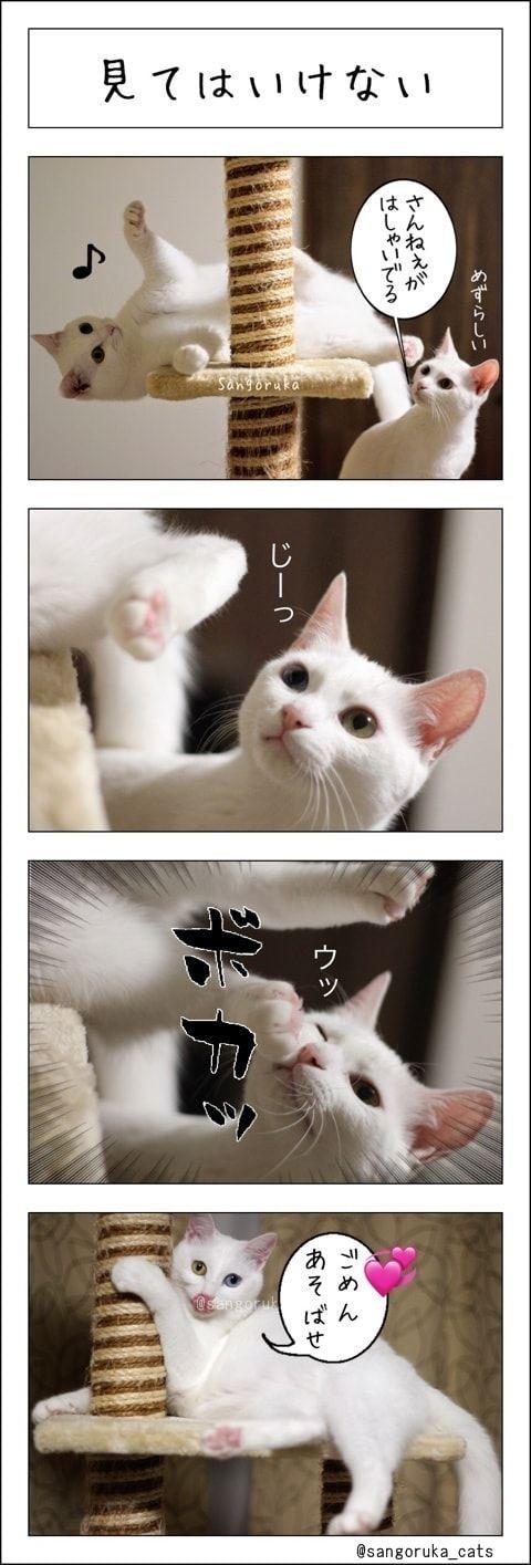 f:id:sangoruka_cats:20180126232005j:plain
