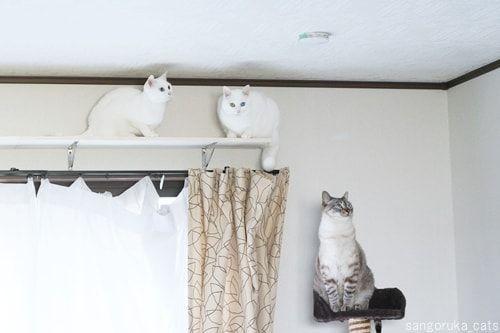 f:id:sangoruka_cats:20180214032919j:plain