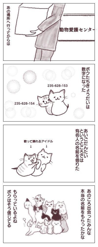 f:id:sangoruka_cats:20180223183447j:plain