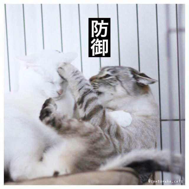 f:id:sangoruka_cats:20180227145746j:plain