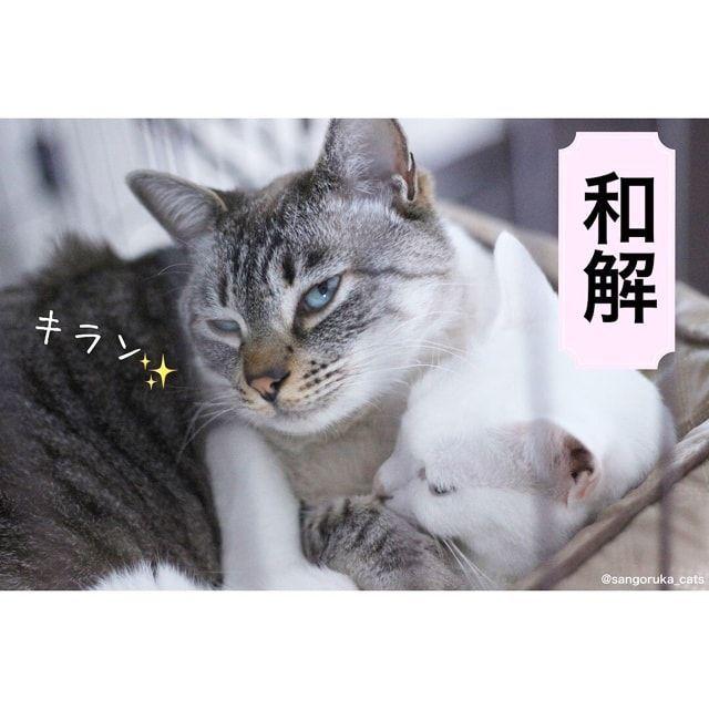 f:id:sangoruka_cats:20180227145747j:plain