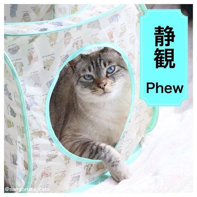 f:id:sangoruka_cats:20180227145752j:plain