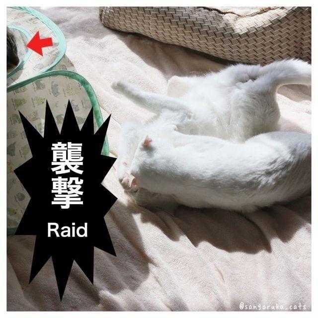 f:id:sangoruka_cats:20180227150628j:plain