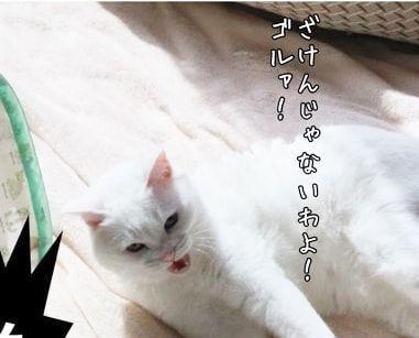 f:id:sangoruka_cats:20180227150631j:plain