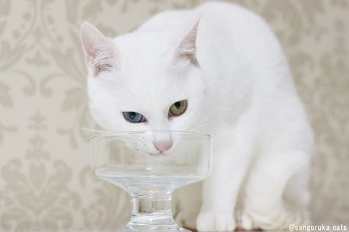 f:id:sangoruka_cats:20180326220502j:plain
