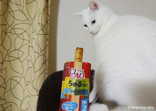 f:id:sangoruka_cats:20180330204723j:plain
