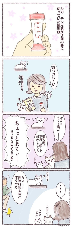f:id:sangoruka_cats:20180330204725j:plain