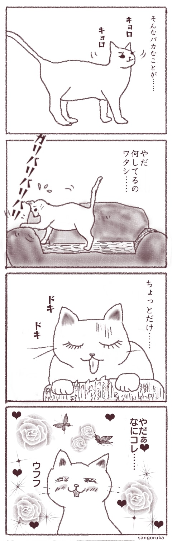 f:id:sangoruka_cats:20180404001155j:plain