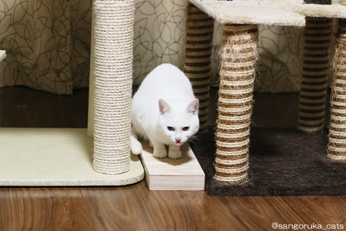 f:id:sangoruka_cats:20180404001200j:plain