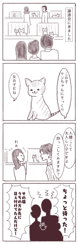 f:id:sangoruka_cats:20180412093850j:plain