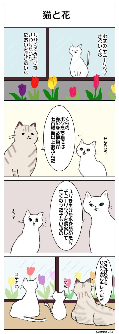 f:id:sangoruka_cats:20180415185526j:plain