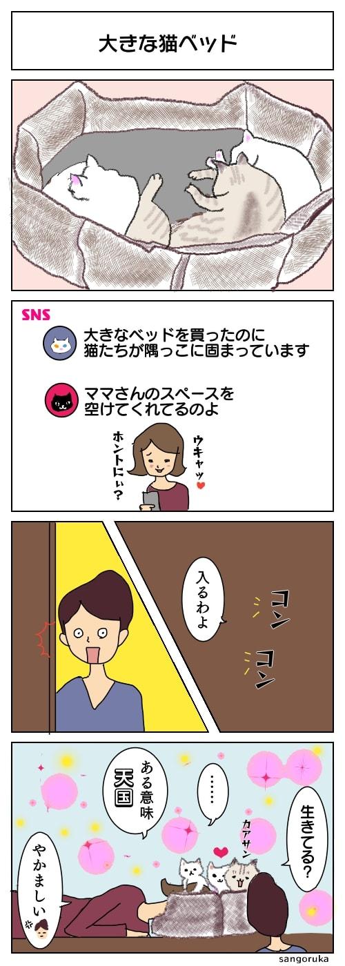 f:id:sangoruka_cats:20180419215339j:plain