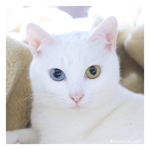 f:id:sangoruka_cats:20180516162355j:plain