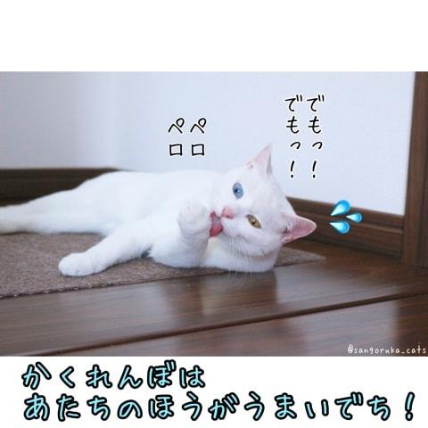 f:id:sangoruka_cats:20180522125123j:plain