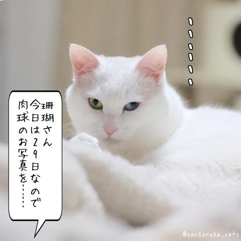 f:id:sangoruka_cats:20180530132006j:plain
